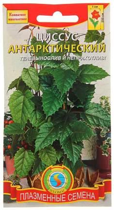 Семена Циссус Антарктический, 3 шт, Плазмас