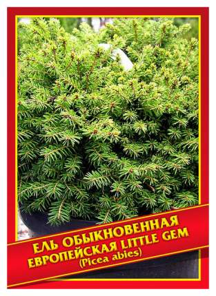 Семена Ель Обыкновенная/Европейская «Little Gem», 10 шт, Симбиоз