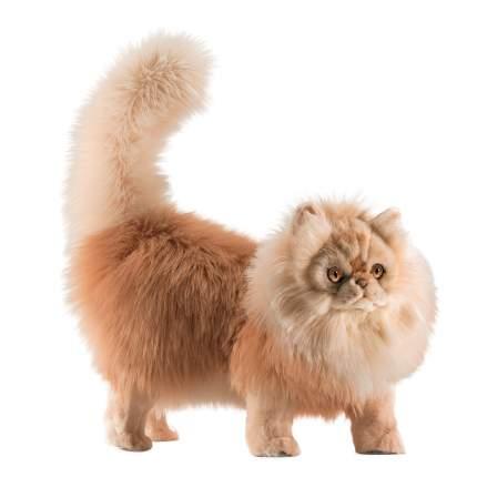 Мягкая игрушка Персидский кот Табби рыже-белый 45 см
