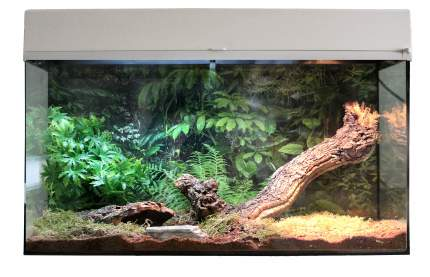 Террариум LUCKY REPTILE Стартовый комплект для Пауков и Скорпионов, белый, 50 x 40 x 28 см
