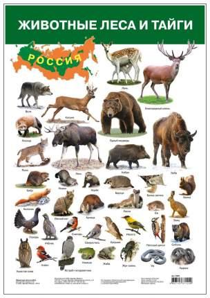 Плакат Дрофа-Медиа Животные леса и тайги 2687