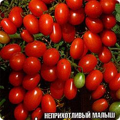 Семена Томат Черри-Оливка, 20 шт, Сибирский сад