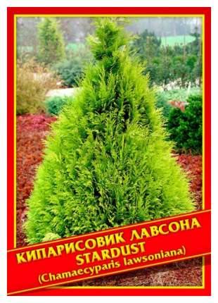 Семена Кипарисовик Лавсона «Stardust», 0,2 г Симбиоз