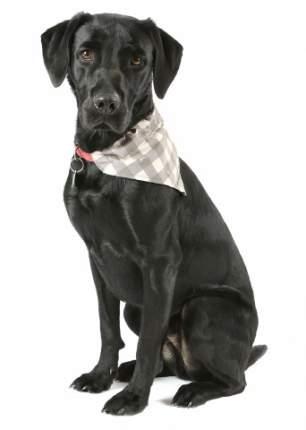 Бандана для собак SCRUFFS Insect Shield Dog размер S, Bandana с пропиткой от блох и клещей