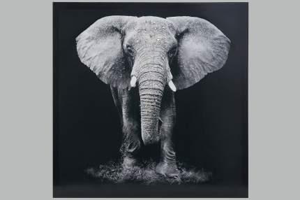 Репродукция 60x60 см Hoff Слон