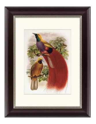 Картина Картины в Квартиру Гольдиева Райская Птица (35х45 см)