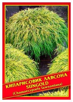 Семена Кипарисовик Лавсона «Sungold», 0,2 г Симбиоз