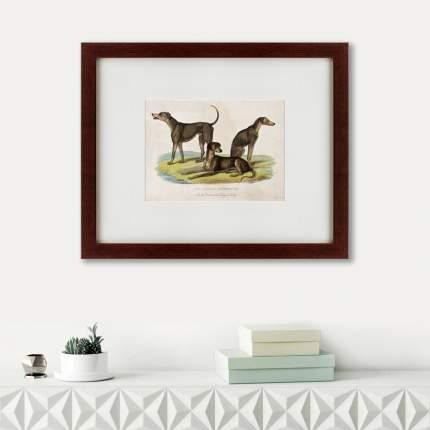 Литография Three African bloodhounds, 1830, 42х52см, Картины в Квартиру