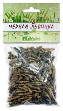 Корм для рептилий Bukahi Сушеные личинки кальциевой мухи Черной Львинки BU-193008