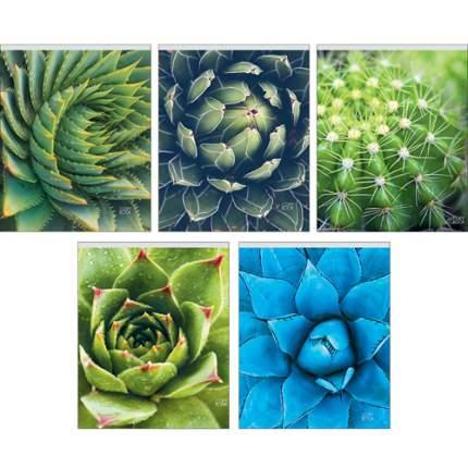 """Тетрадь """"Удивительные растения"""" (А5, 48л, скрепка, клетка), ТК485764"""