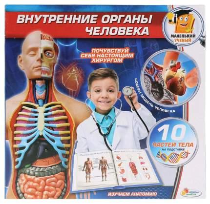 Набор для исследования Играем Вместе Внутренние органы человека