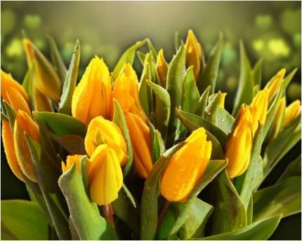 """Картина на холсте с подрамником ХитАрт """"Жёлтые тюльпаны"""" 80x64 см"""