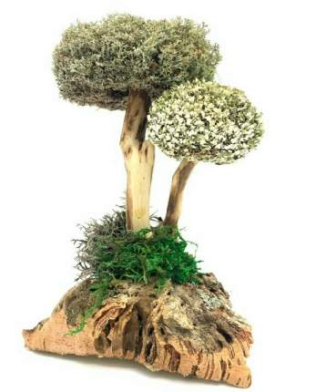 Сухоцвет цетрарии в виде дерева (26 см)