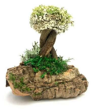 Декоративное дерево из цетрарии (19 см)