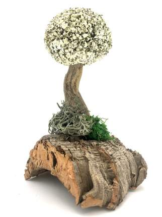 Сухоцвет цетрарии в виде дерева (20 см) Cetraria 20175