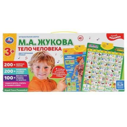 Плакат двусторонний на бат музыкальная азбука М.Жукова, тело человека Умка