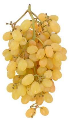 Виноград без косточек белый