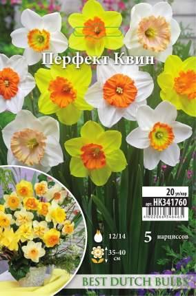 Нарцисс Перфект Квин смесь крупнокорончатых 5шт 12/14