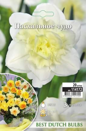 Нарцисс Пасхальное чудо 3шт 10/12