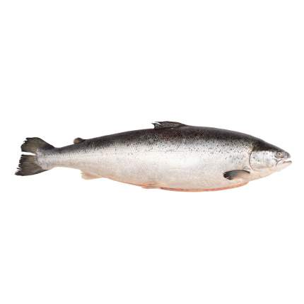Лосось Мурманск охлажденный ~3,5 кг