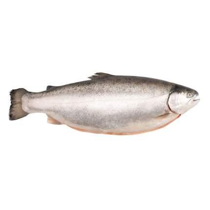 Форель морская охлажденная  ~ 4,5 кг