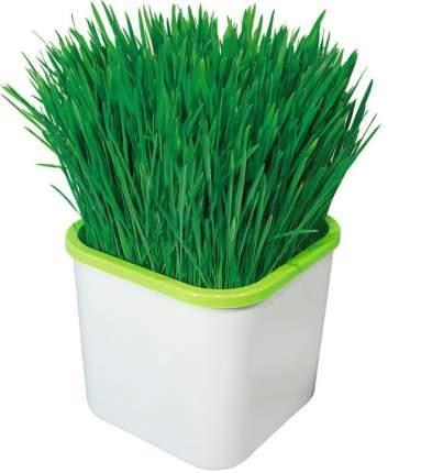 Автоматический набор для проращивания семян Наш Кедр 5926 Домашний АэроСАД