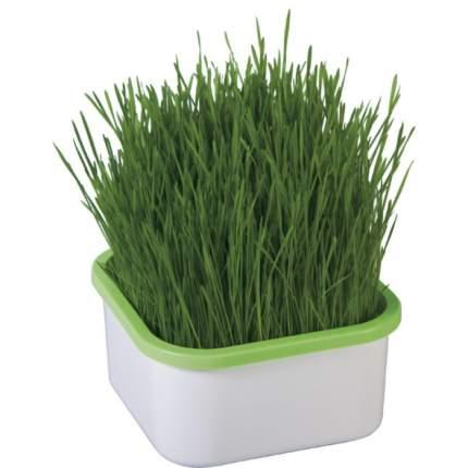 Проращиватель зеленой травки для кошек «Здоровья КЛАД»,шт.