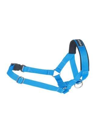 Недоуздок AmiPlay Basic N3 Кокер спаниель  17-32х39-50х2 см, синий
