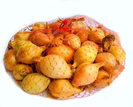 Лук-севок Стурон 0,5 кг