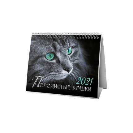 Календарь ND Play на 2021 год. Породистые кошки (настольный, домик)