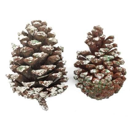 Природные материалы для флористики Astra&Craft XY19-834, длина 10-12 см, ширина 6-8 см