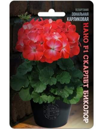 Семена БиотехНика Пеларгония зональная карликовая Нано Скарлет Биколор F1, 5 шт.