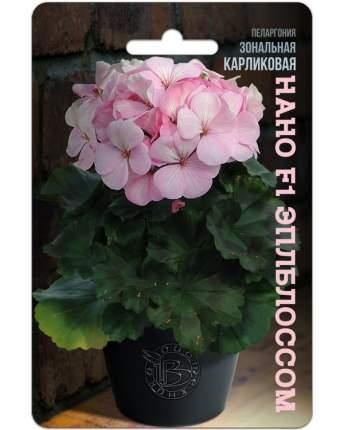 Семена БиотехНика Пеларгония зональная карликовая Нано Эплблоссом F1, 5 шт.