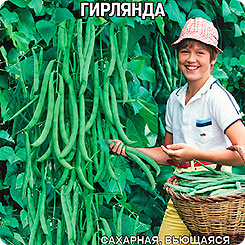 Семена Фасоль спаржевая Гирлянда, 4 г, Premium seeds