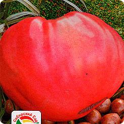 Семена Томат Розовый мед, 20 шт, Сибирский сад