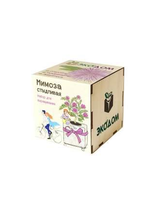 Подарочный набор для выращивания Мимоза стыдливая