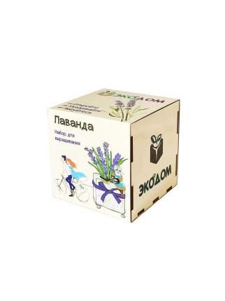 Подарочный набор для выращивания Лаванда