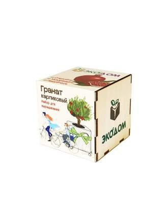 Подарочный набор для выращивания Гранат Карликовый