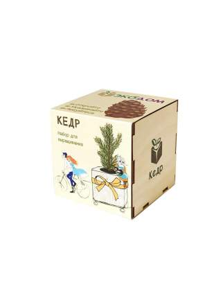 Подарочный набор для выращивания Кедр