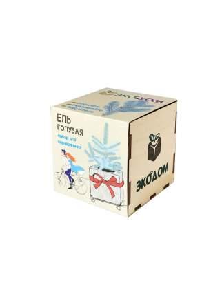 Подарочный набор для выращивания Ель голубая