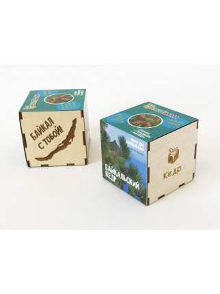 Подарочный набор для выращивания Кедр Байкальский