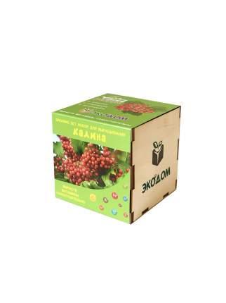 Подарочный набор для выращивания в древесном кубике Vitaресурс. Калина