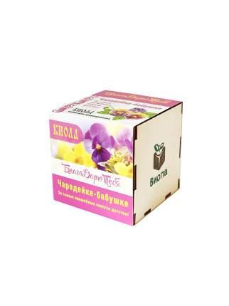 Подарочный набор для выращивания в древесном кубике БлагоДарю тебя! Виола, Бабушке…