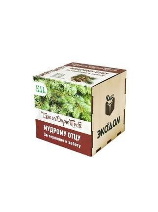 Подарочный набор для выращивания в древесном кубике БлагоДарю тебя! Ель Мудрому отцу