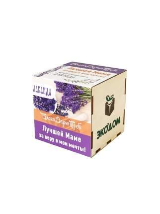 """Подарочный набор для выращивания в древесном кубике """"БлагоДарю тебя! """"Лаванда"""" Лучшей маме"""