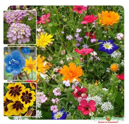 Семена газонных трав и сидератов Русский огород 841052 Газон цветущий Умбра 120 г