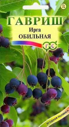Семена деревьев и кустарников Гавриш Ирга круглолистная Обильная 10 пакетов по 0,5 г