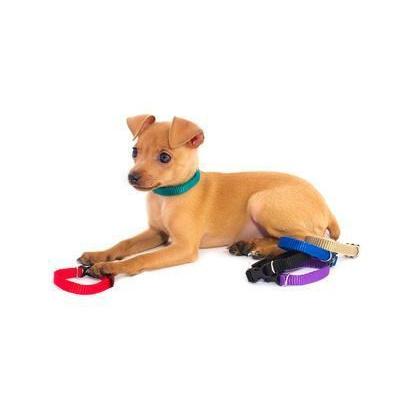 Ошейник для собак повседневный Дарэлл, обхват шеи 28 см, капрон